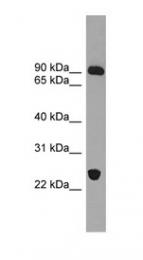 GTX44953 - VPS53