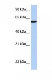 GTX45156 - AMIGO3