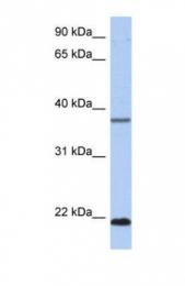 GTX45162 - HDDC3