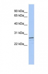 GTX45187 - VSTM2A