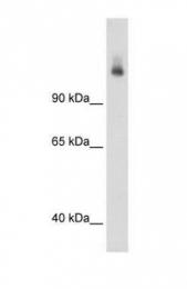 GTX46536 - CPS1