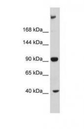 GTX46953 - MUPP1