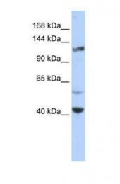 GTX47445 - KCNH3