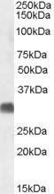 GTX47547 - SRD5A2