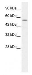 GTX47659 - KCNK10