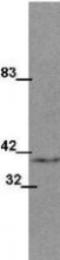 GTX48642 - WNT1