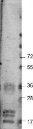 GTX48811 - VEGF-A