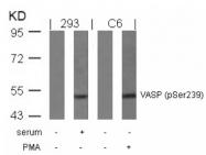 GTX50213 - VASP