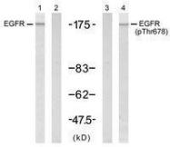 GTX50233 - EGFR / ERBB1
