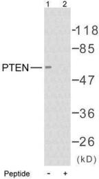 GTX50411 - PTEN