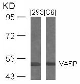 GTX50506 - VASP
