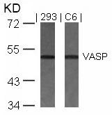 GTX50536 - VASP
