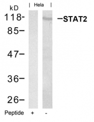 GTX50661 - STAT2