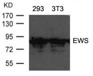 GTX50739 - EWSR1