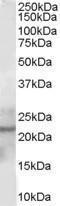 GTX56140 - Glutathione peroxidase 2 / GPX2