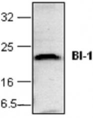 GTX59681 - Bax inhibitor 1