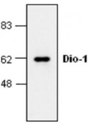 GTX59722 - DIDO1