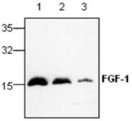 GTX59831 - FGF acidic / FGF1