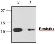 GTX59861 - Resistin