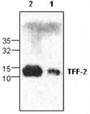 GTX59890 - Trefoil factor 2 / SML1