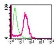 GTX61417 - Myelin-associated glycoprotein (MAG)