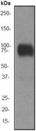 GTX61592 - CD44