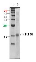 GTX65342 - Flt3 ligand