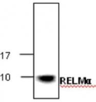 GTX65436 - RELM alpha
