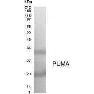 GTX70455 - PUMA