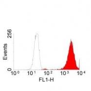 GTX75350 - EGFR / ERBB1