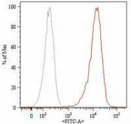 GTX79978 - CD105 / Endoglin