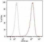 GTX79979 - CD105 / Endoglin