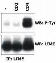 GTX80075 - LIME1