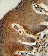GTX80442 - Parathymosin / PTMS