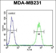 GTX80961 - Cell surface A33 antigen / GPA33