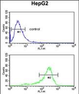 GTX81073 - Aminoacylase-3 / ACY3