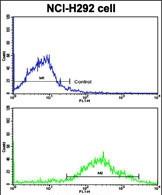 GTX81125 - Max-like protein X