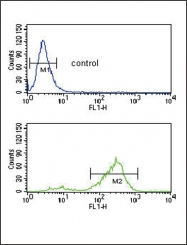 GTX81434 - Vitronectin