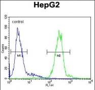 GTX81489 - Cathepsin H