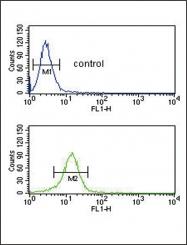 GTX81507 - Collagen type V alpha 2 chain