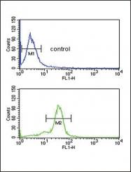 GTX81531 - Methionine Sulfoxide Reductase A / MSRA