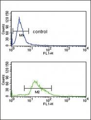 GTX81534 - Plasminogen / PLG