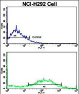 GTX81714 - Calponin-1