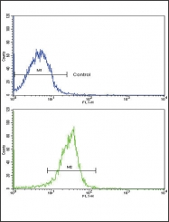 GTX81749 - SPARC / Osteonectin