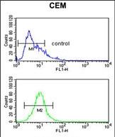 GTX81834 - Fucosyltransferase 1