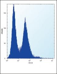 GTX81996 - Nucleophosmin