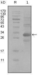 GTX83022 - Tyrosine-protein kinase ITK/TSK