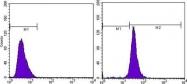 GTX83163 - Actin beta / ACTB