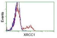 GTX83411 - XRCC1