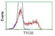 GTX83487 - TTC32